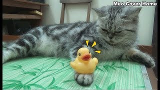 Cat Balance Duck In Hands So Cute | Funny Cat Vines 2018 | Meo Cover Home