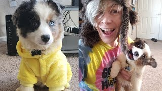 Trying Dog hacks and DIY Pet Life Hacks! Simple Life Hacks & More by Blossom