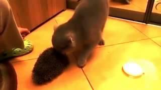 猫が毛繕いする