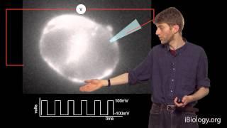 Adam Cohen (Harvard / HHMI): Visualizing Activity in the Brain