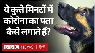 Sniffer Dogs कैसे Corona Pandemic के ख़िलाफ़ जंग में मदद कर रहे हैं Video HD