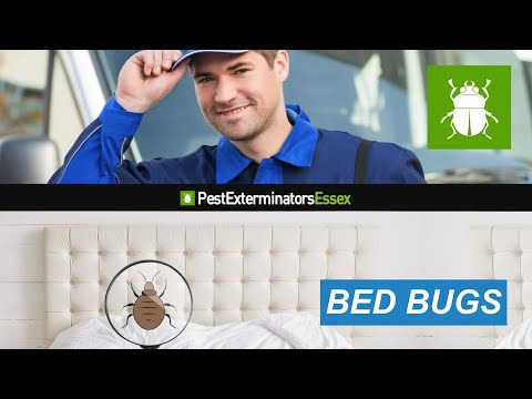 Handy Video From Pest Exterminators Essex In Case You Are Coping With Bed Bugs