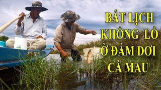 HOW TO CATCH THE EELS - AMAZING METHOD IN DAM DOI CA MAU - VIETNAM