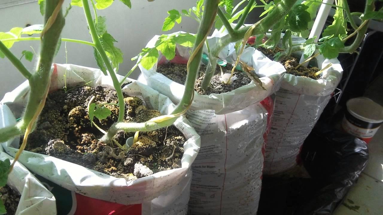 Update 2 Make Free Diy Self Watering Grow Bag For
