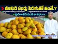 How to Eat Mango : Benefits Of Mangos For You | Dr Manthena Satyanarayana Raju Videos | GOOD HEALTH