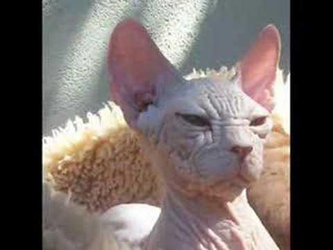 hqdefault jpgUgliest Cat Alive