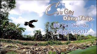 Cu Gáy Đồng Tháp  Bổi 74  Diều Hâu  Ngày 8 8 2017
