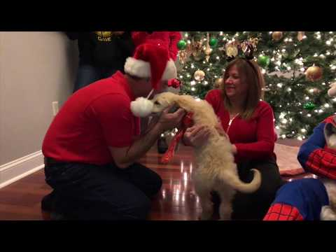 HOLIDAY SURPRISE HAS DAD ACTING LIKE A BOY (Puppy Surprise)