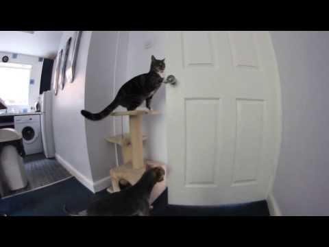 Otwieranie drzwi przez kota - poziom zaawansowany