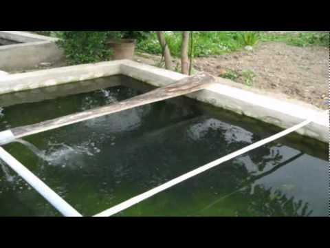 Criando tilapias em casa for Criar mojarras en casa