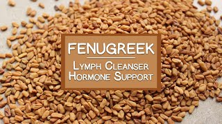 Fenugreek Seeds and Sprouts, A Lymph Cleanser and Hormone Booster