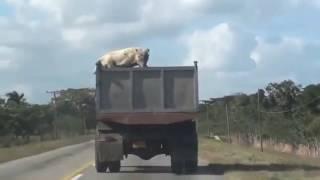 قفز من شاحنة على