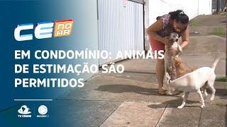 Em condomínio: Animais de estimação são permitidos, mas sem incomodar