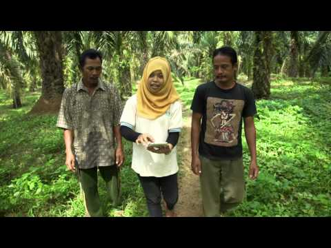 Sustainable Palm Oil Indonesia