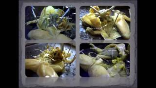 GR 10 Frog Dissection (Science Video Tutorial)