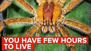 This Spider Will Kill You Within A Few Hours
