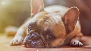 1 hour Sleep and relax Music For Dogs, Cats & All Pets, Stress Relief, Anxiety Healing Music 0047