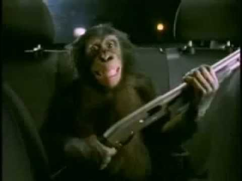 suburban auto group trunk monkey videos dating