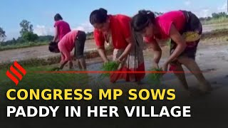 Watch: MP sows paddy in village, remembers her farmer root..