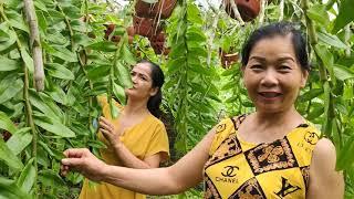 Người cựu chiến binh già trồng lan - Vườn lan PĐ khủng nhất Cao Bằng !