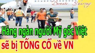 D.I TR.Ú MỚI NHẤT : Hà.ng ng.à.n ng.ư.ờ.i Mỹ gốc Việt sẽ b.ị T.Ố.NG C.Ổ v.ề V.N