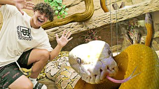 Spending 24 Hours In A Snake Pit (Crazy Dares w/ Pets)