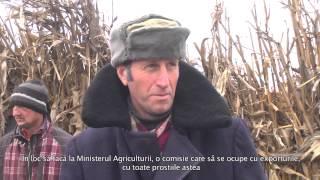 Greva foamei la Pungești, Vaslui   26 – 12 – 2013