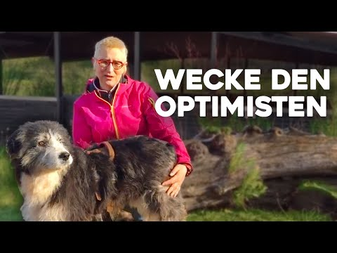 "video Wecke den ""Optimisten"" im Hund – Onlinekurs von Mirjam Cordt"
