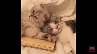 Taylor Swift 's Cats - Olivia and Meredith  'Best & Latest Videos'  -New Video-