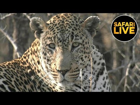 safariLIVE - Sunrise Safari - September 11, 2019
