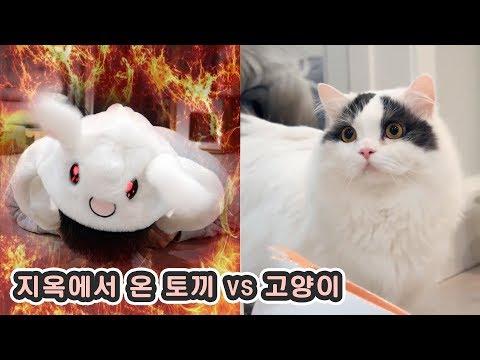 지옥에서 온 토끼 vs 고양이