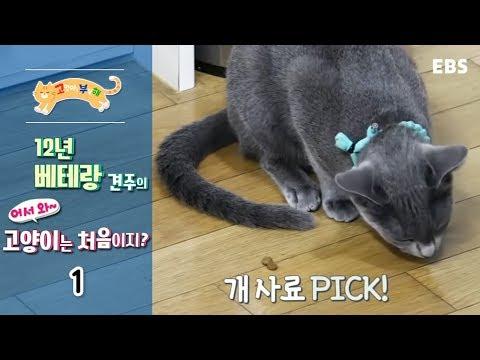 고양이를 부탁해 - 12년 베테랑 견주의 어서와 고양이는 처음이지_#001