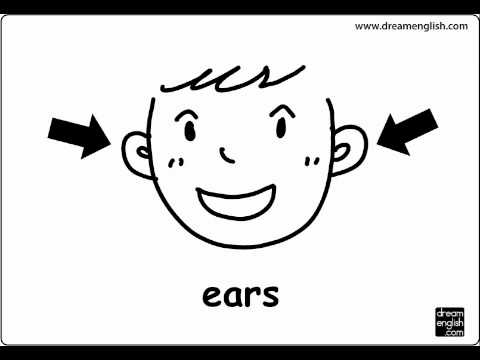 body parts lets practice kids english youtube