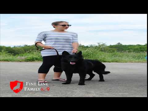 Best Protection Dogs for Sale