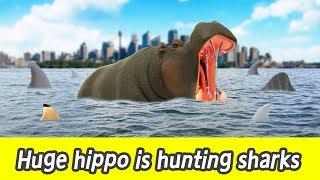 [EN] #80 Huge hippo is hunting sharks, kids education, learn sharks name, Collecta figureㅣCoCosToy