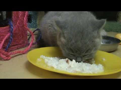 термобелье как накормить котенка чесноком абсорбции полиэстера
