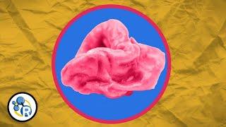 (VIDEO) Šta se dešava u našem tijelu nakon što progutamo žvakaću gumu?