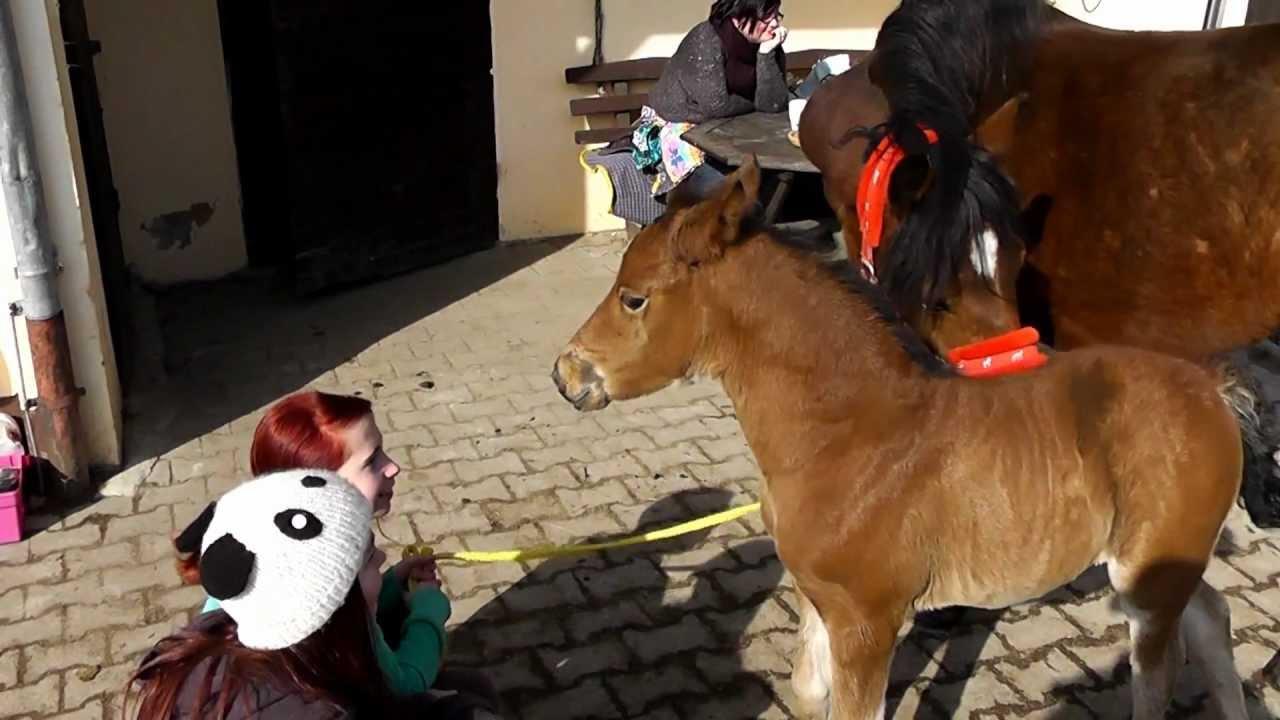 FAIL,Funny Horses,horse´s broad jump,Funny Animals,马,失败 ... |Youtube Pets Funny Horses