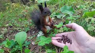 A squirrel malfunctions  while eating... coffee beans?