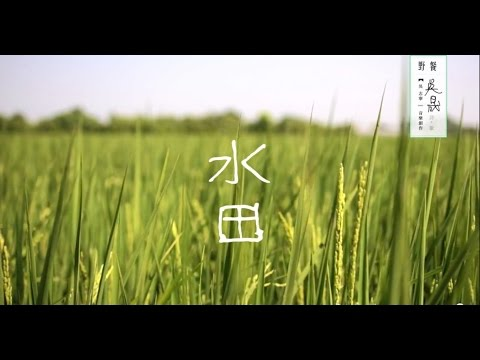 吳志寧「水田」(Official Music Video)