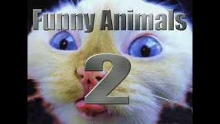 Sehr lustige Tiere 02