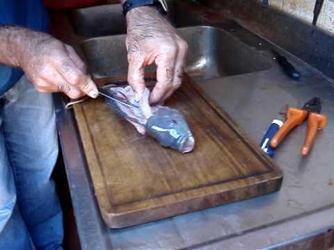 Cria o de til pias em casa 5 tanque novo for Cria de tilapia en casa