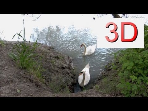 3D Video: River & Forest Relaxation #3