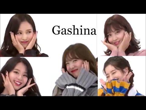 [TWICE/트와이스]TWICEメンバーのGashina(가시나)