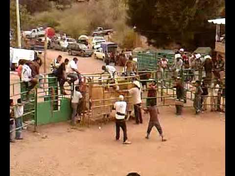 Jaripeo-Ejutla de Crespo,Oaxaca