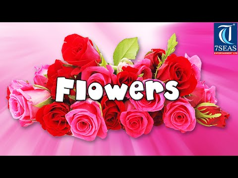 Names Of Different Flowers Wmv Videomoviles Com