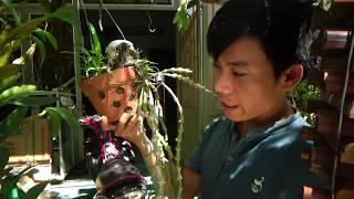 Orchid | chia sẻ kinh nghiệm trồng phong lan - trúc phật bà | experience grow dendrobium orchids