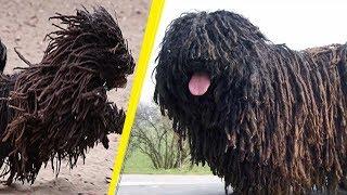 5 Weirdest Dog Breeds You Will Ever See!