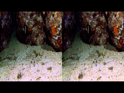 Trailer 3D HD Diving Montenegro