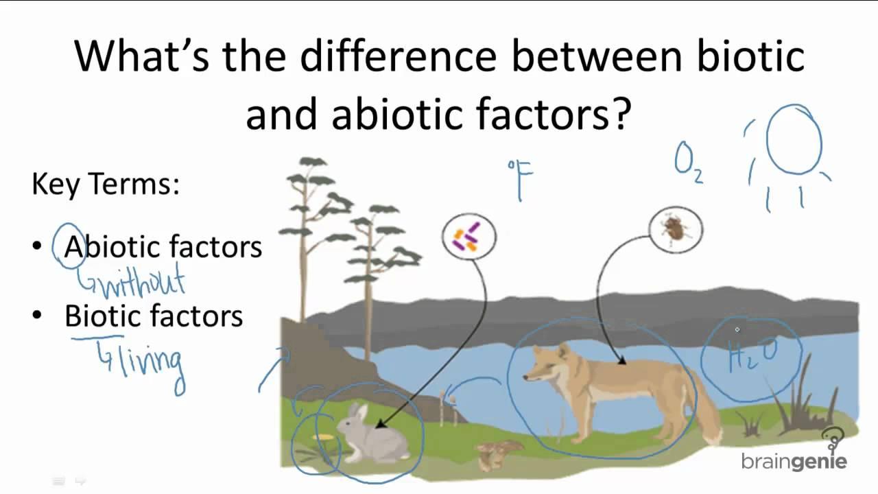 relationship between biotic and abiotic environment